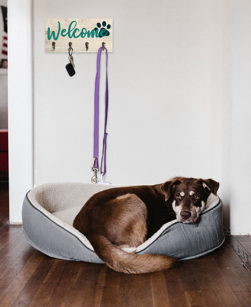 Home Decor Dog Lifestyle